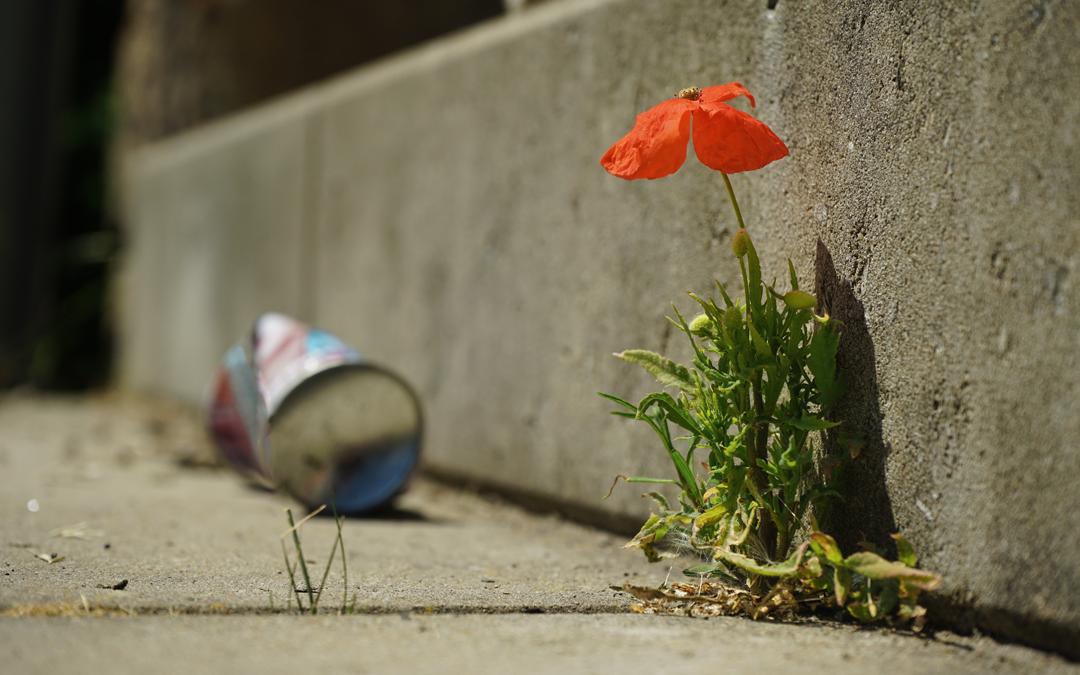 Tegenslag en veerkracht | Wat maakt dat we tóch overeind blijven?